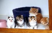 小猫写真4 壁纸15 小猫写真4 动物壁纸
