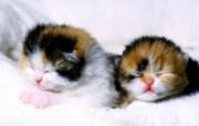 小猫写真4 壁纸17 小猫写真4 动物壁纸