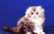 小猫写真4 壁纸18 小猫写真4 动物壁纸