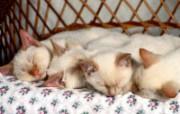 小猫写真4 壁纸19 小猫写真4 动物壁纸