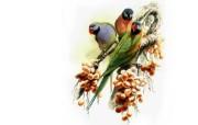 小鸟天堂 动物壁纸