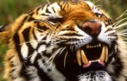 野生动物高清壁纸 1600x1200 壁纸2 野生动物高清壁纸 1 动物壁纸
