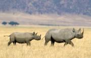 野生动物高清壁纸 1600x1200 壁纸16 野生动物高清壁纸 1 动物壁纸
