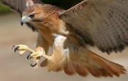 野生鸟类摄影壁纸 动物壁纸