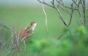 野外的小鸟精美壁纸 动物壁纸