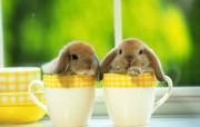玉兔 动物壁纸