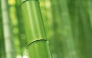 竹林深处 动物壁纸