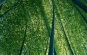 竹林深处竹子壁纸 壁纸1 竹林深处竹子壁纸 动物壁纸
