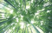 竹林深处竹子壁纸 壁纸2 竹林深处竹子壁纸 动物壁纸