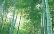竹林深处竹子壁纸 壁纸3 竹林深处竹子壁纸 动物壁纸