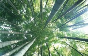 竹林深处竹子壁纸 壁纸4 竹林深处竹子壁纸 动物壁纸