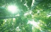 竹林深处竹子壁纸 壁纸5 竹林深处竹子壁纸 动物壁纸