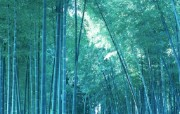竹林深处竹子壁纸 壁纸6 竹林深处竹子壁纸 动物壁纸