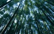 竹林深处竹子壁纸 壁纸9 竹林深处竹子壁纸 动物壁纸