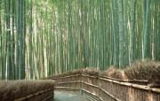 竹林深处竹子壁纸 壁纸10 竹林深处竹子壁纸 动物壁纸