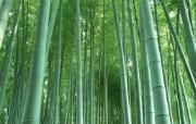 竹林深处竹子壁纸 壁纸11 竹林深处竹子壁纸 动物壁纸