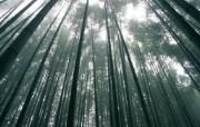竹林深处竹子壁纸 壁纸12 竹林深处竹子壁纸 动物壁纸