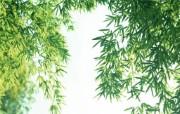 竹林深处竹子壁纸 壁纸14 竹林深处竹子壁纸 动物壁纸