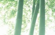 竹林深处竹子壁纸 壁纸17 竹林深处竹子壁纸 动物壁纸
