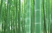 竹林深处竹子壁纸 壁纸18 竹林深处竹子壁纸 动物壁纸
