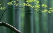 竹林深处竹子壁纸 壁纸22 竹林深处竹子壁纸 动物壁纸