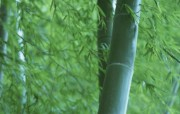 竹林深处竹子壁纸 壁纸24 竹林深处竹子壁纸 动物壁纸