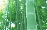 竹林深处竹子壁纸 壁纸25 竹林深处竹子壁纸 动物壁纸