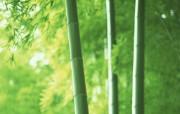 竹林深处竹子壁纸 壁纸26 竹林深处竹子壁纸 动物壁纸