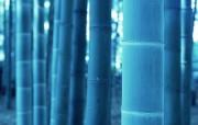 竹林深处竹子壁纸 壁纸27 竹林深处竹子壁纸 动物壁纸