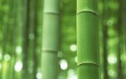 竹林深处竹子壁纸 壁纸28 竹林深处竹子壁纸 动物壁纸