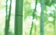 竹林深处竹子壁纸 壁纸29 竹林深处竹子壁纸 动物壁纸