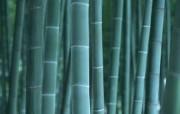 竹林深处竹子壁纸 壁纸30 竹林深处竹子壁纸 动物壁纸