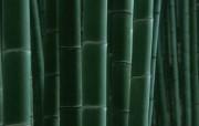 竹林深处竹子壁纸 壁纸31 竹林深处竹子壁纸 动物壁纸
