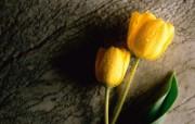 桌面鲜花3 动物壁纸