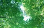自然绿色二 1 动物壁纸