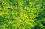 自然绿色三 四 动物壁纸