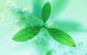 自然绿色五 六 动物壁纸