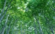自然绿色一 1 动物壁纸