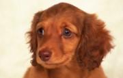 最新 小狗写真 动物壁纸