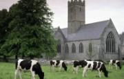 爱尔兰风光壁纸 风景壁纸