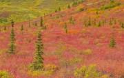 阿拉斯加风光风景宽屏壁纸 壁纸22 阿拉斯加风光风景宽屏 风景壁纸