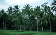 巴厘岛 热带风情的天堂小岛壁纸 巴厘岛棕榈树桌面壁纸 巴厘岛热带风情壁纸 风景壁纸