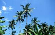 巴厘岛 热带风情的天堂小岛壁纸 热带棕榈树桌面壁纸 巴厘岛热带风情壁纸 风景壁纸