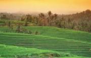 巴厘岛 热带风情的天堂小岛壁纸 巴厘岛梯田桌面壁纸 巴厘岛热带风情壁纸 风景壁纸