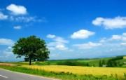 北海道的郊野 风景壁纸