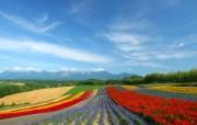 北海道天堂富良野与美瑛田园摄影集 风景壁纸