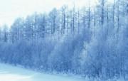 北海道之冬 hokkaido Japan 风景壁纸