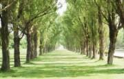 草原和田园!绿色植物高清壁纸 风景壁纸