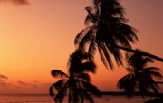 大溪地 梦幻浪漫的热带伊甸园壁纸 壁纸28 大溪地:梦幻浪漫的热 风景壁纸