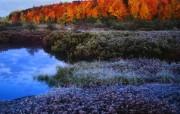 大自然纯朴之美 秋天的颜色壁纸图片壁纸 大自然纯朴之美 风景壁纸
